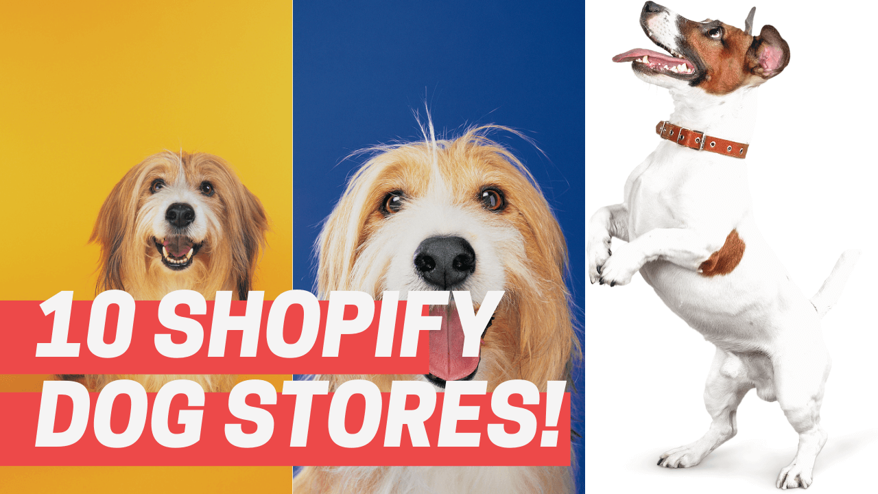 shopify dog stores!